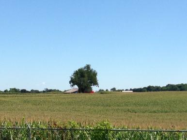 So many cornfields!