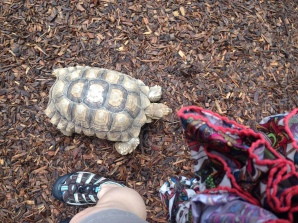 This one kept walking around it's enclosure.
