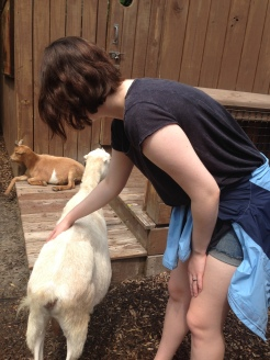 This goat walked up to Lexie and stamped his foot demanding she pet him!