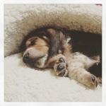 Sleepy Ringo