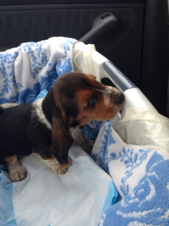 On the way to his new home!