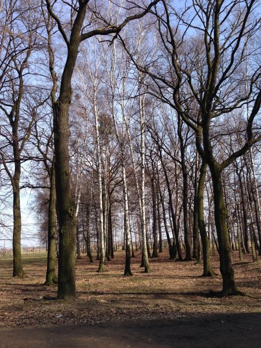 The trees in Auschwitz