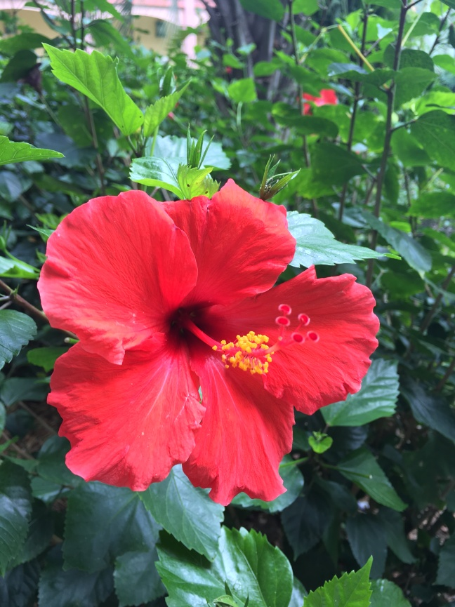 Beautiful flowers at our resort