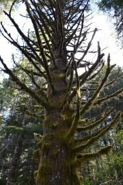 OregonCoast07DSC_0295