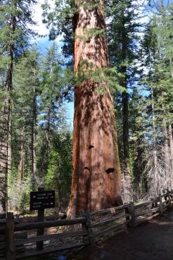 Yosemite11DSC_0686