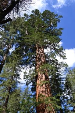 Yosemite11DSC_0687