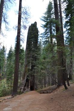 Yosemite11DSC_0690