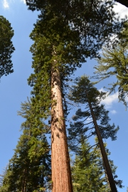 Yosemite11DSC_0702