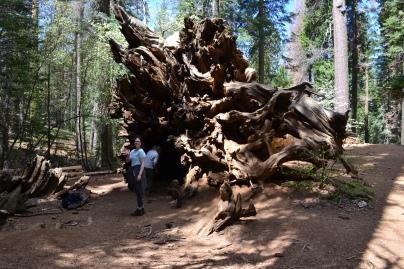 Yosemite11DSC_0703