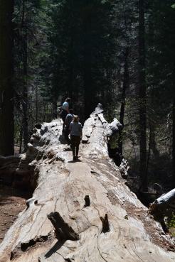 Yosemite11DSC_0716