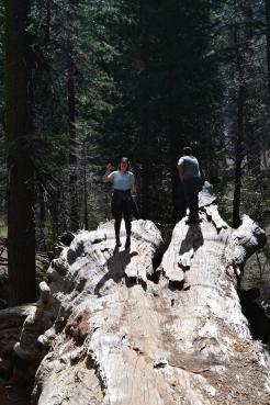 Yosemite11DSC_0721