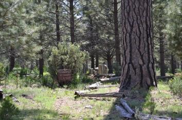 Yosemite11DSC_0739