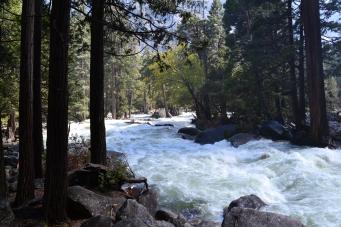 Yosemite11DSC_0797