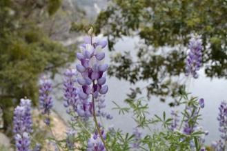 Yosemite12DSC_0834