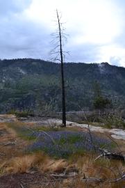 Yosemite12DSC_0854